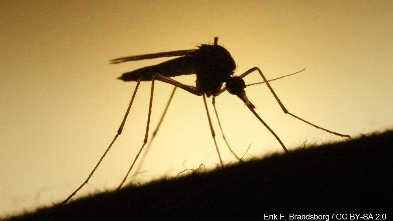 Health department collects mosquitoes with West Nile