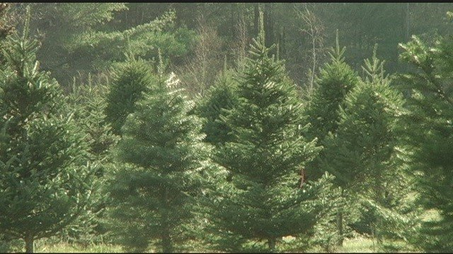 Florence families scout for Christmas trees at Grassy Creek Farms