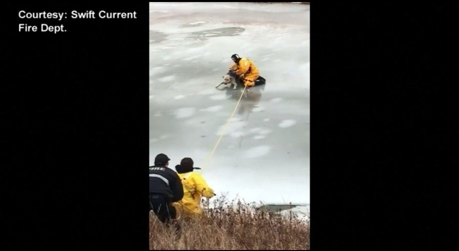Watch firefighter's dramatic rescue of dog from icy creek