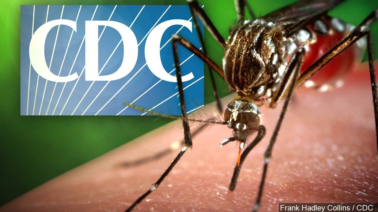 Zika Tied to Rise in US Birth Defects: CDC