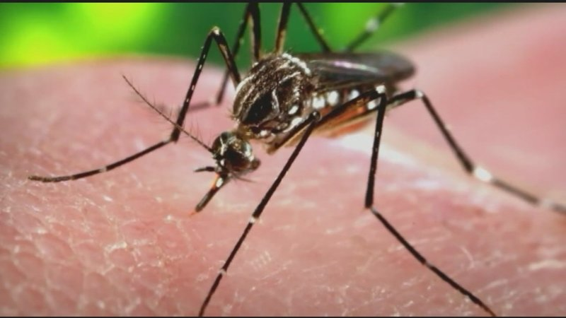 But In Certain Parts Of The World All It Takes Is One Mosquito Bite To Inflict Fatal And Deadly